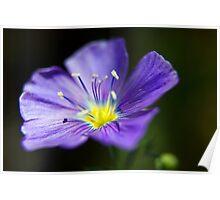 Wildflower 4 Poster
