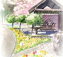 Spring in Maxell Cherry Gardens by bakuma