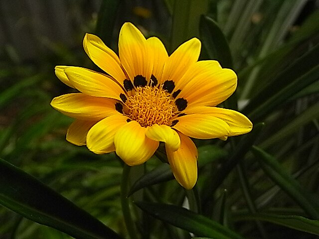 a single yellow  by nyxs