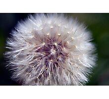 Wildflower 7 Photographic Print