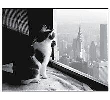 Urban Kitty Photographic Print