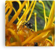 Ants up close Canvas Print