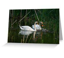 Swans & Cygnets Greeting Card