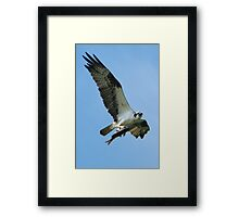 Nothing But The Whole Fish Framed Print