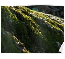 Moss - natural light Poster