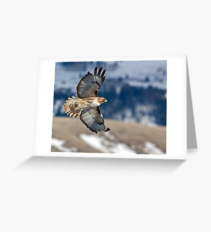 Red-Tailed Hawk Banking Away Greeting Card