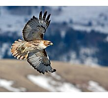 Red-Tailed Hawk Banking Away Photographic Print