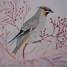 Bohemian Waxwing at Feast by RLHall