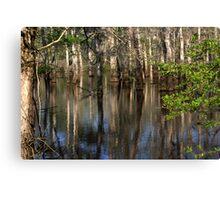 Cypress Reflections Canvas Print