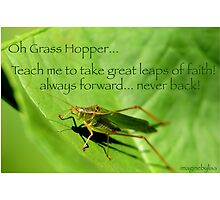 Oh Grasshopper! by Lisa hildwine