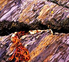Fissure by Nancy Barrett
