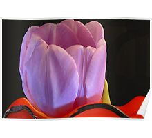 A pink tulip in a red vase Poster