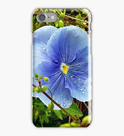 Dewy Blue Pansy iPhone Case/Skin