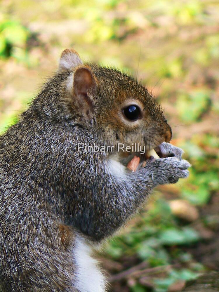 I'm nuts... by Finbarr Reilly