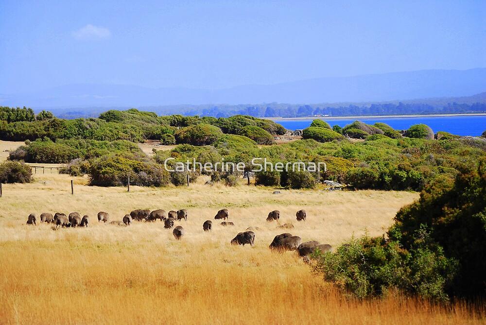 Sheep grazing near the ocean in Tasmania, Australia by Catherine Sherman