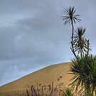 Morocco ? ....... no,  the Far North, New Zealand. by Roy  Massicks