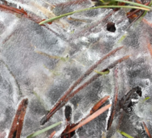 Pine Needles in Early Spring Ice, Canada Sticker