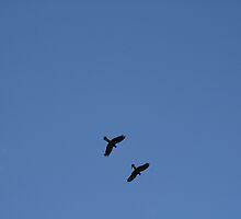 Black Cockatoos. by elphonline