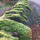 Mossy Wall by paul boast