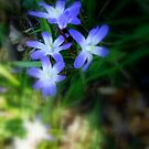 Spring Flowers by paul boast