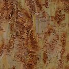 Scribbly Gum 5 by Martin How