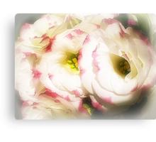 Lisianthus (Prairie Rose) - Always lovely Canvas Print