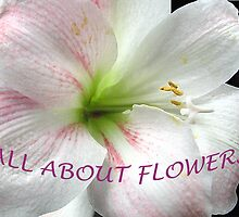 All About Flowers by jacqi