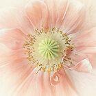 The tiny pink poppy by EbyArts