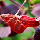 autumn by studiofascino