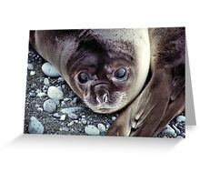 Babies, Nose to Tail. Southern Elephant Seal Pups, Macquarie Island  Greeting Card