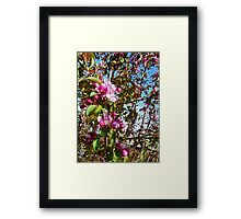 crab apple blossoms, spring tree art- abstract painting Framed Print