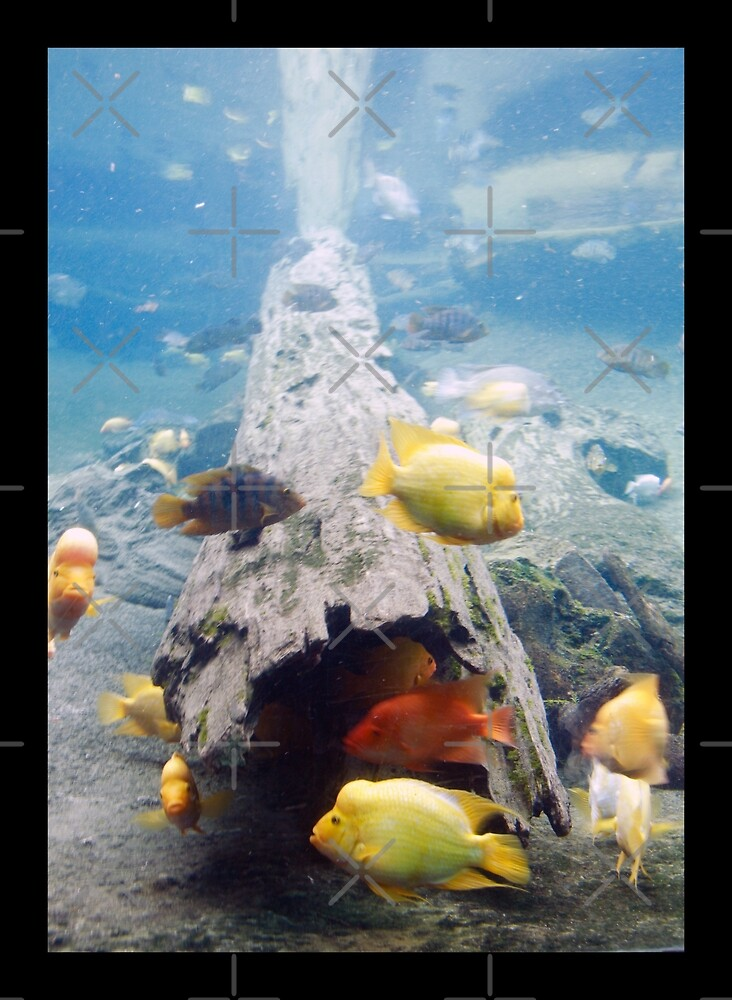 Fish in the Sea by ImagineByLisa