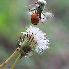 Ladybug relaxing on Dandelion plants by AlixCollins