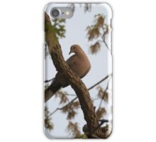 Ring-Necked Dove, posing for the camera. iPhone Case/Skin