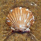 Scallop Underwater by David Turton