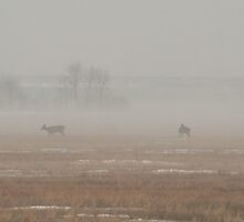 Two Deer In The Mist by Stephen Thomas