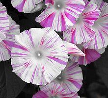 Ipomoea Selective Color by Matt Emrich