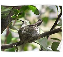 Nesting II Poster