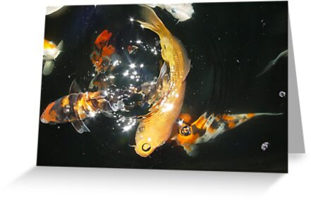Koi Universe by May Lattanzio