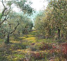 Olive Field by David Turton