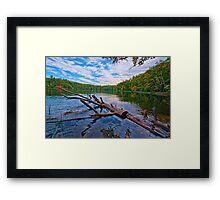 Water Logged Framed Print