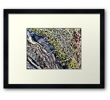 Silver Maple Root, Moss, Grass, Flower Framed Print