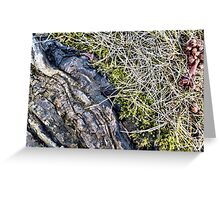 Silver Maple Root, Moss, Grass, Flower Greeting Card
