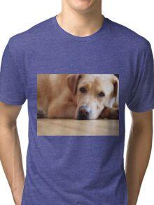 Gentle Giant Tri-blend T-Shirt