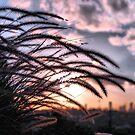 Sunset breeze by andreisky