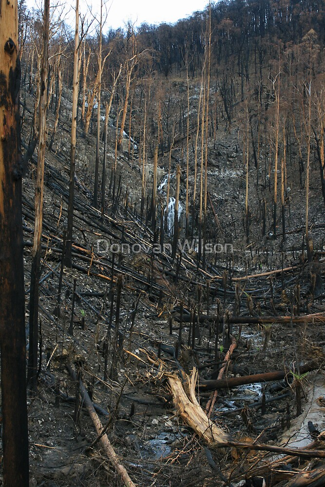 Steavenson falls the aftermath of black saturday by Donovan Wilson