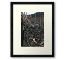 Steavenson falls the aftermath of black saturday Framed Print