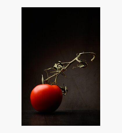 Red tomato Photographic Print