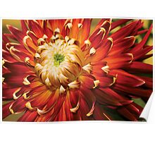 Dahlia - Nature's Radiance Poster