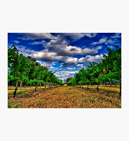 """Between The Vines"" Photographic Print"